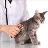 Ветеринарные клиники в Морках